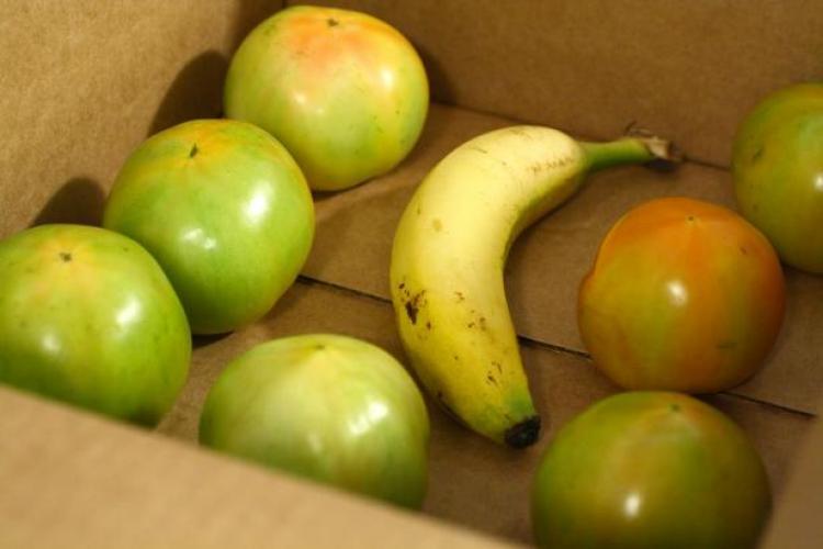 banani i zelebie pomidori