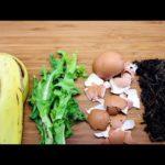 Использование пищевых отходов